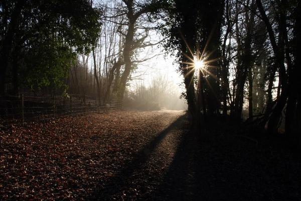 Woodland footpath by jcf