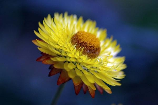 Kew Garden Flower by dickbulch