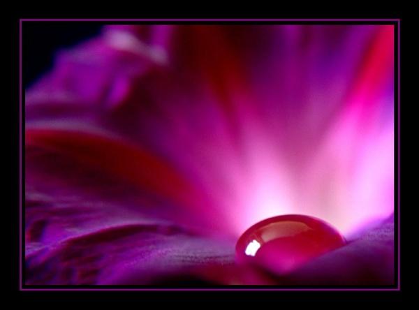 Purple velvet by PjPhotography49