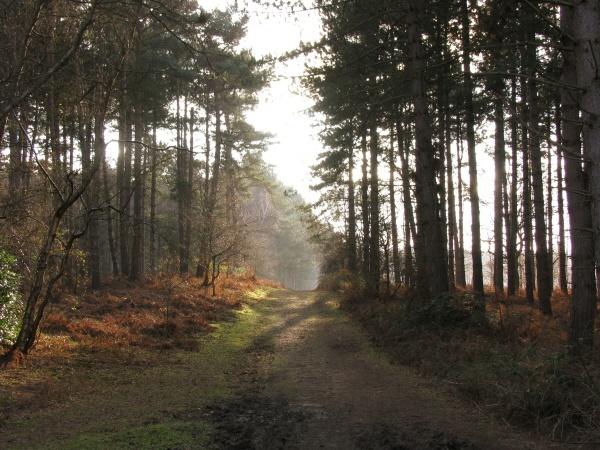 Woodland Sunlight by LindaSJ