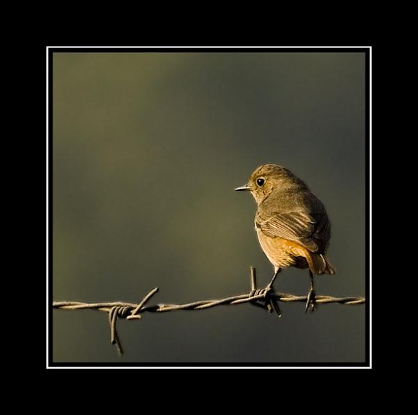 Visitor in my garden by nitinhopeindia