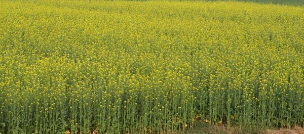 crops by apabritabasu28