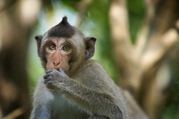 Baby Macaque by Keelo