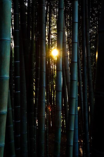 Sun Weaving by iamagoo