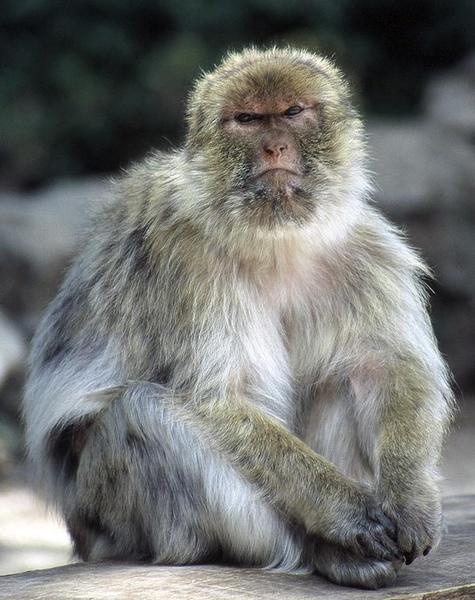 Hong Kong Monkey by stuart davies