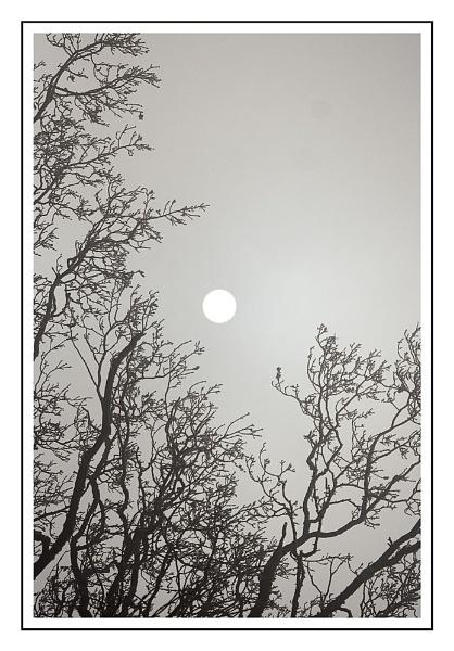 winter sun by firzhugh