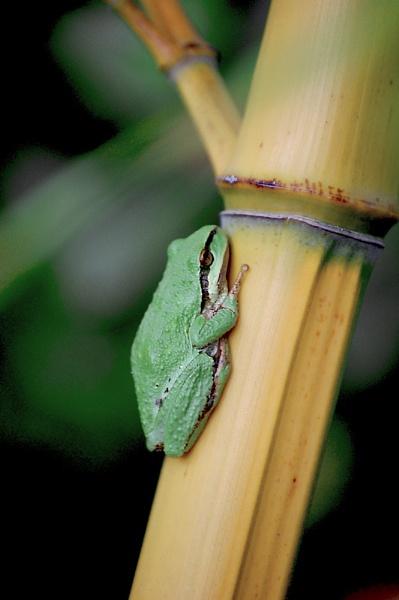 little green frog by beriah