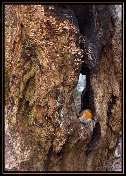 Peek-a-Boo!! by AnnS