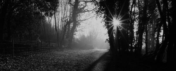 Woodland footpath II by jcf