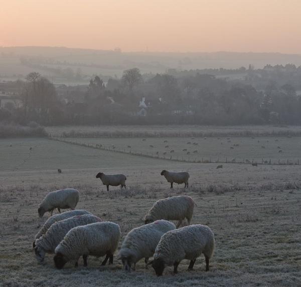 Cold breakfast -  South Darenth, Kent by derekhansen