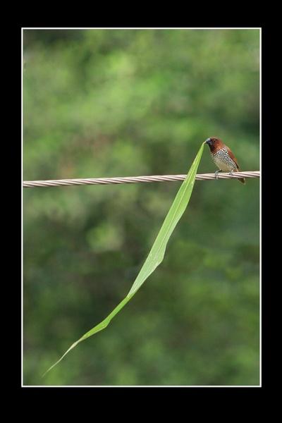 even a grassblade is valuable.. by drjskatre