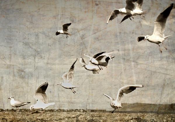 e-gulls by Mari