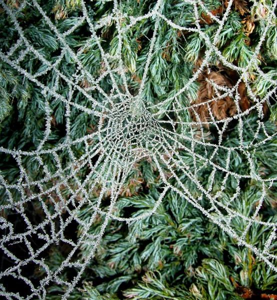 Web by Hazard