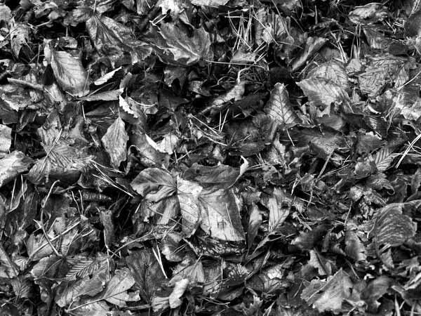 Leaves by un_hartim