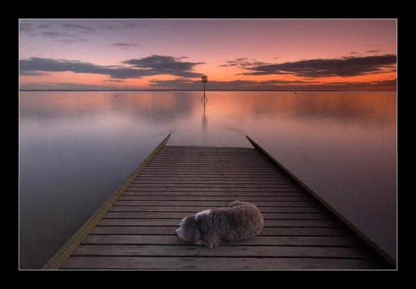 One Sleeping Dog by jeanie