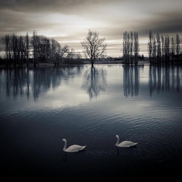Zen by Silvijo