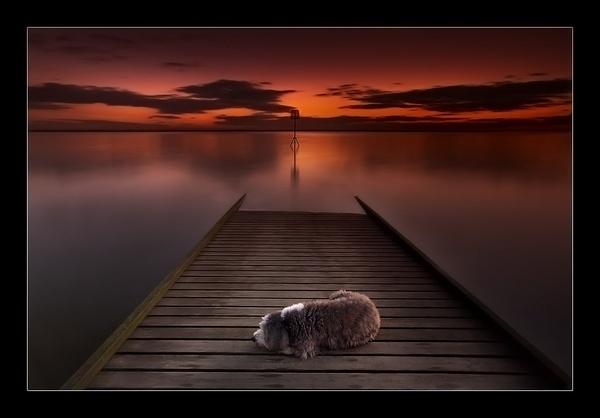 Sleeping Dog by jeanie