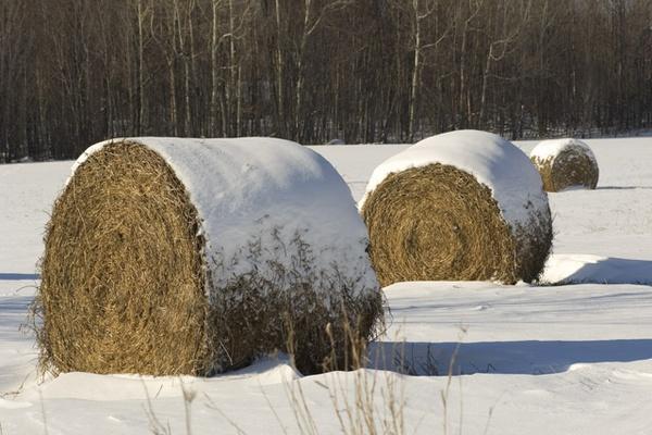 Frosted Shredded Wheat Farm by jwatt