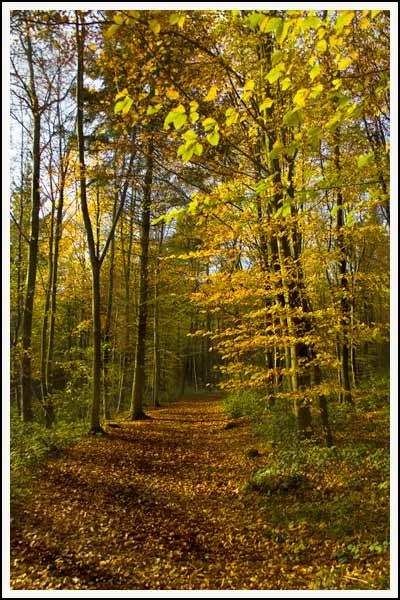 Clwedog Trail by simonjr