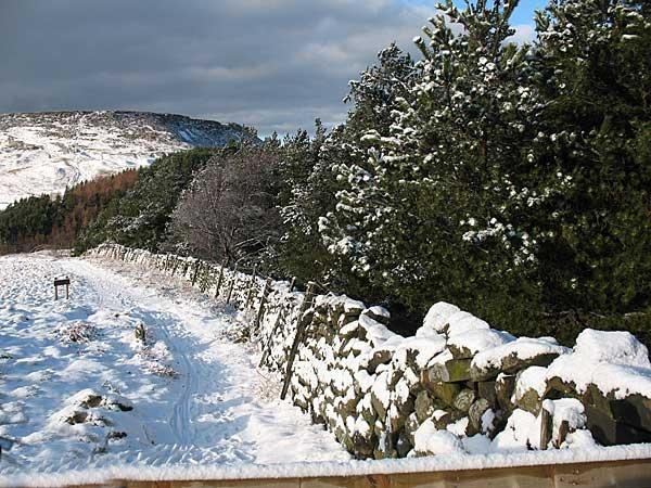 Snowy by terra