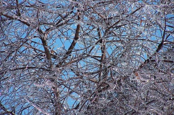 Ice by idz612