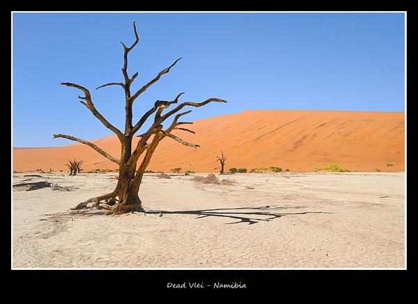 Dead Vlei by BobA