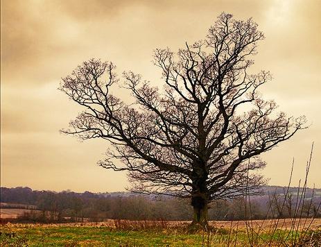 Winter Tree by mattmatic
