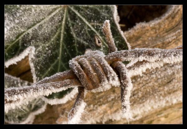 Winter Shot by ABiggs