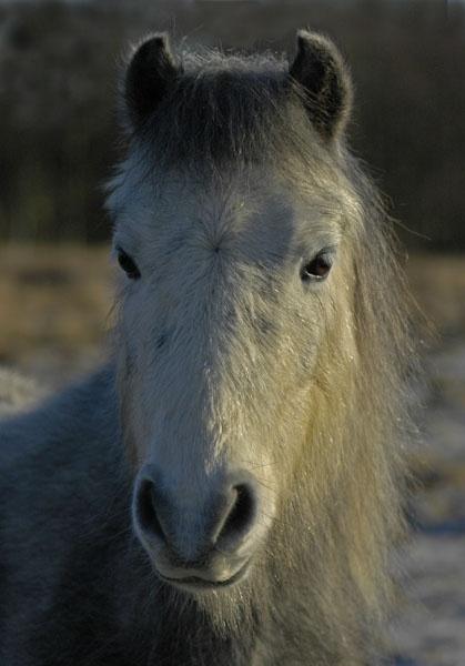 pony by pip01