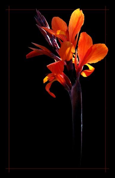 Orange Burst by Anjantoo