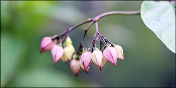 Little Bells by jonathanbp