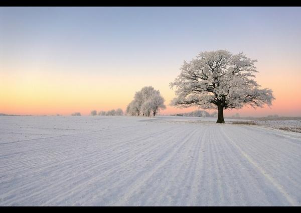 The lonesome oak by PeterK001