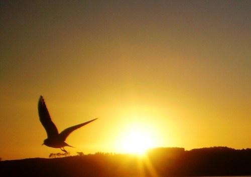 one bird one sun by unicorn17