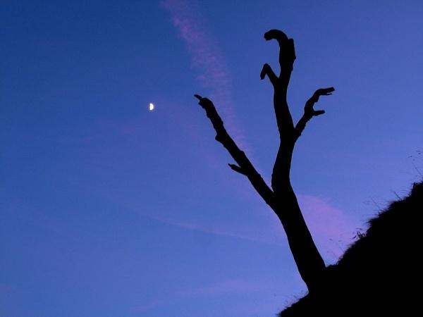 Treefingers by alansdottir