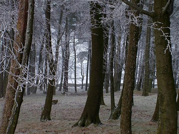 Through the wood by alansdottir