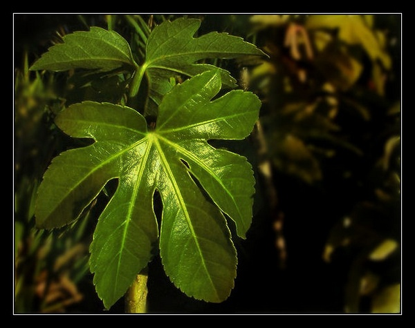 Leaves by AndyH55