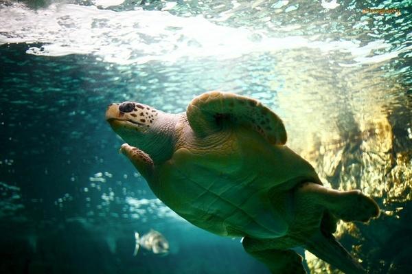 Zoo Aquarium de Madrid by cosmic_spunk