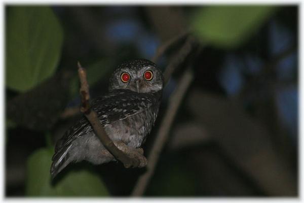red eye as an advantage by drjskatre