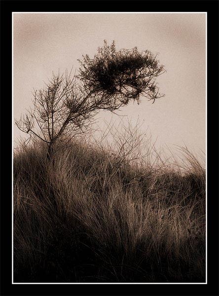 Ghostly Tree by jjmorgan36