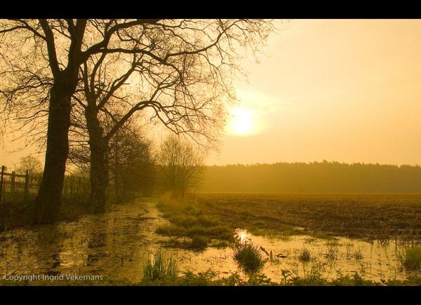 In Flanders Fields by IngridVekemans