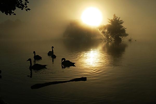 Misty Dawn by copek