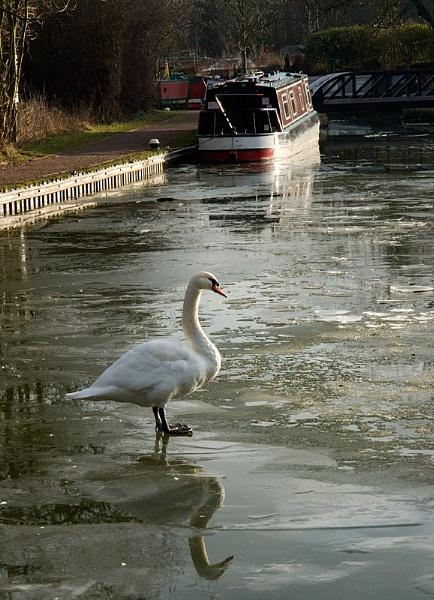 Frozen Canal by steveb