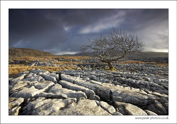 Twistle-tree by richardwheel