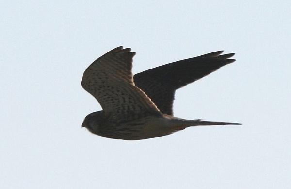fly bye by kencbr
