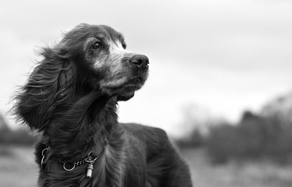 Windy walk by Juliee