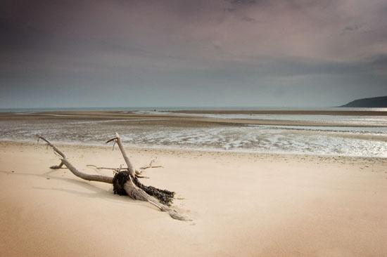 Driftwood by nickhawk