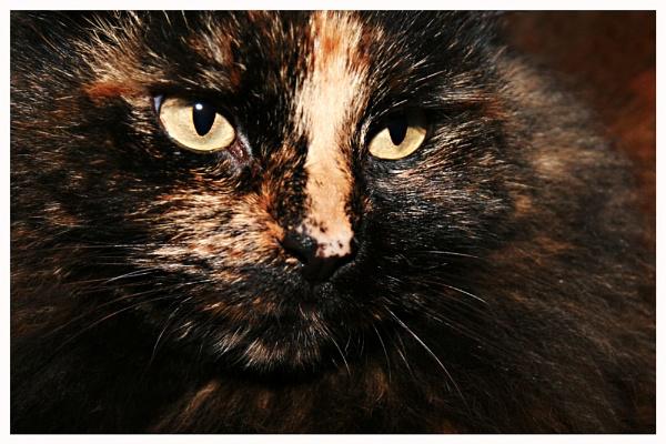 Cat by Eightball