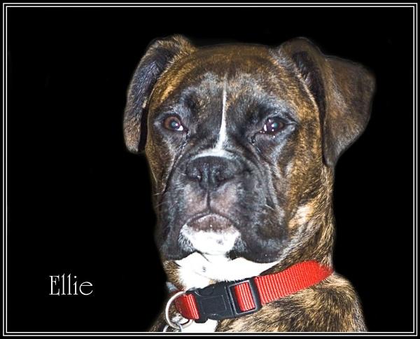 Ellie by Stuart463