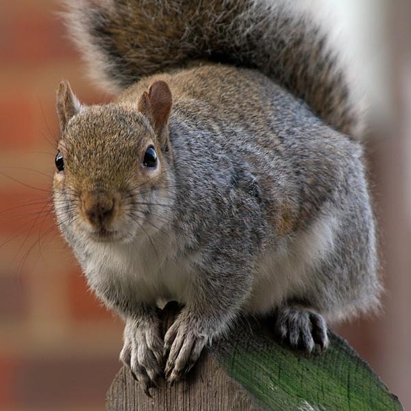 Squirrel by piotro