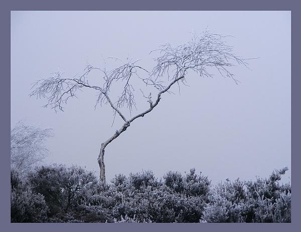 winter sleep by rosiebobo